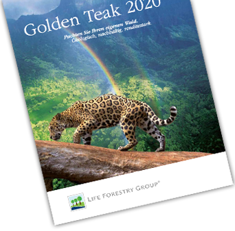 Golden Teak Waldpacht Life Forestry